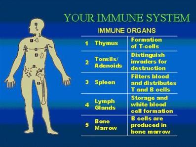 Immune-System2