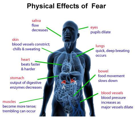 understanding-fear-main